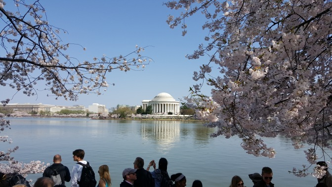 Strolling Among the Cherry Blossoms in DC